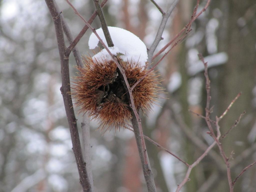 winter2010 091